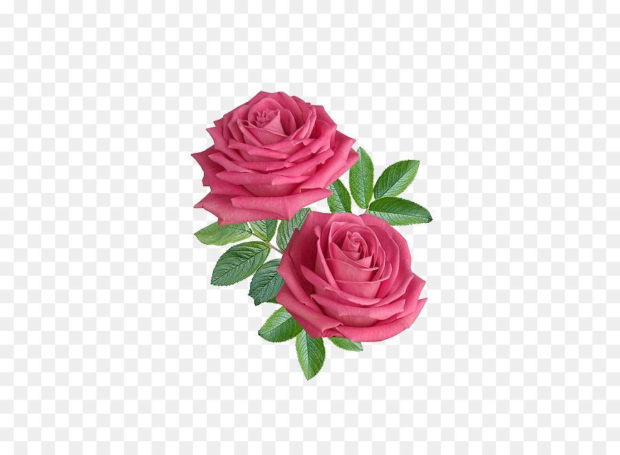 Black Pink Rose png download.