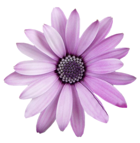 FreeToEdit flower png with transparent background.