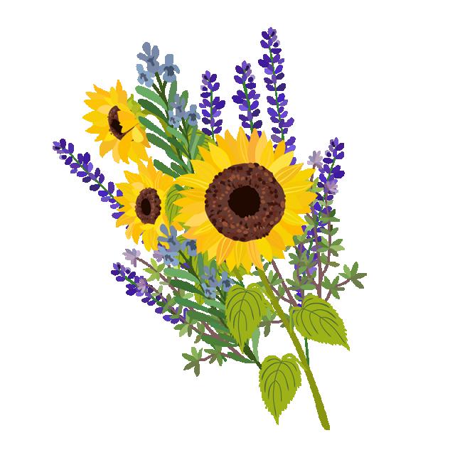 Sun Flower Vector Floral, Plant Vector, Flower, Vintage.