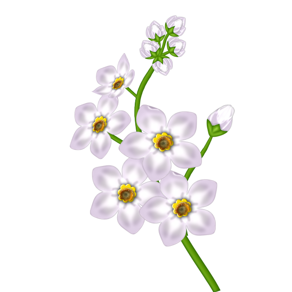 White_Flower_Transparent_Clipart.png?m=1367532000.
