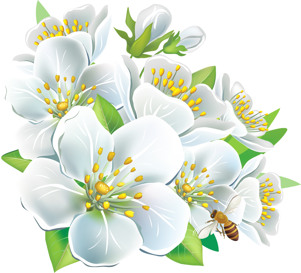 Large White Flowers PNG Clipart.