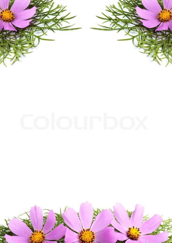 Similiar Flowers Without Background Keywords.