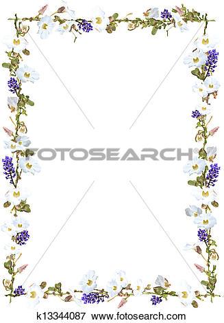 Stock Illustration of Purple ginger and white sky flower vine.