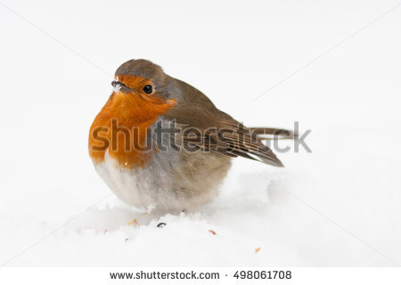 Fluffed Up Stock Photos, Royalty.