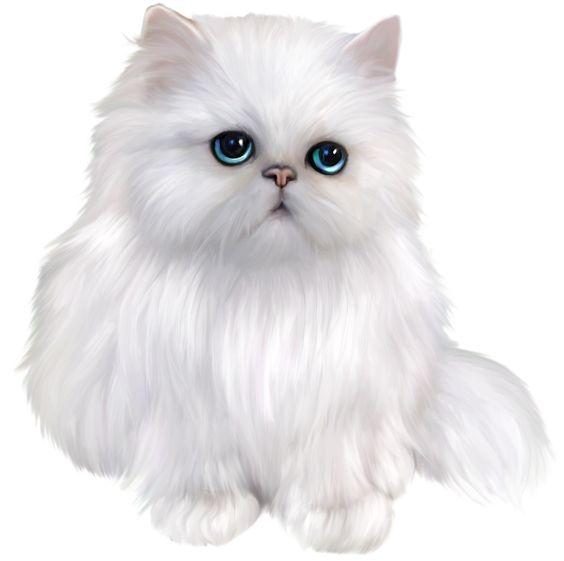 White Persian Cat Clipart.