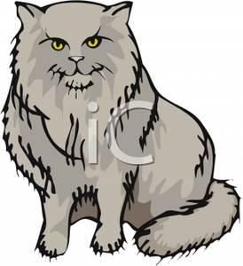 Fluffy Gray Cat Sitting Down.