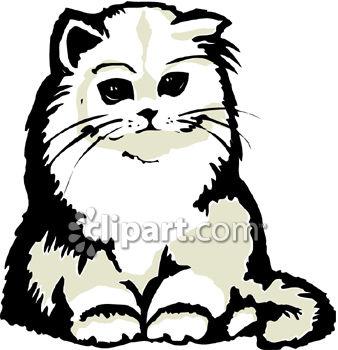 A Fluffy Persian Kitten.