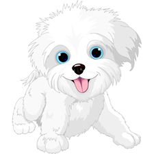 Clipart Of A Cute Bichon Frise Or Maltese Puppy Dog Resting.