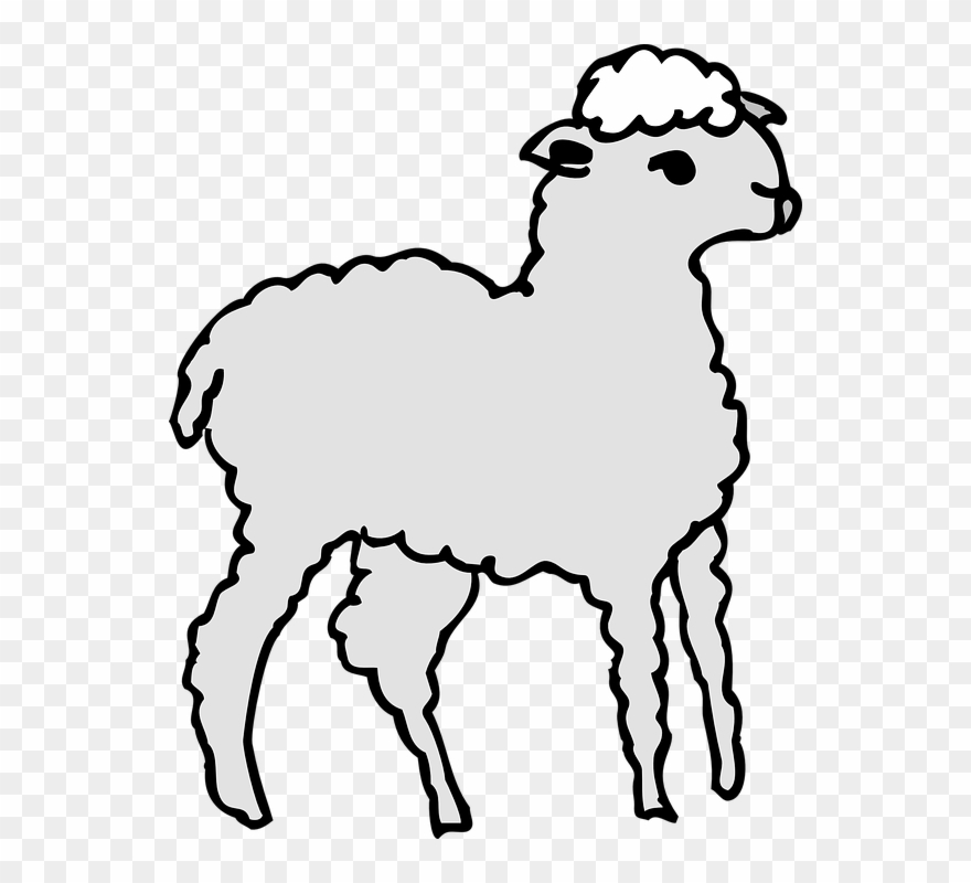 Drawn Lamb Fluffy Sheep Clipart (#2702373).