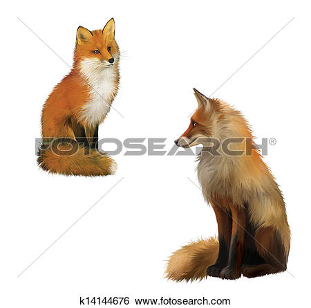 Stock Illustration of Adult shaggy red Fox sittng with big fluffy.