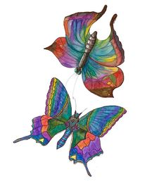 Multi coloured butterflies on white canvas.