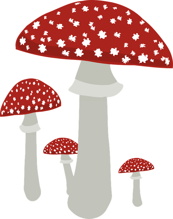 Free vector graphic: Fly Agaric, Fungus, Mushroom.