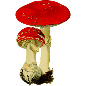 Fly agaric clipart, cliparts of Fly agaric free download (wmf, eps.
