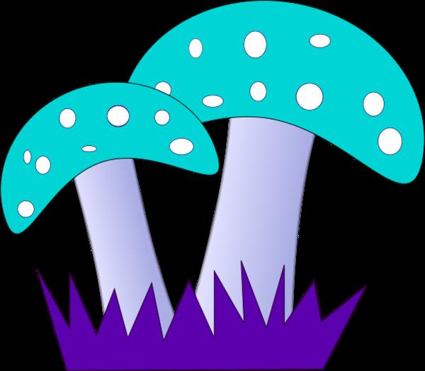 Fliegenpilz fly amanita.