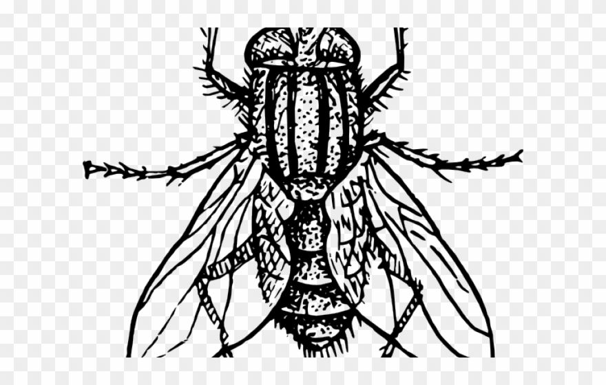 Flies Clipart Kuliglig.