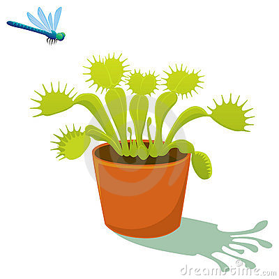 Flytrap Stock Illustrations.