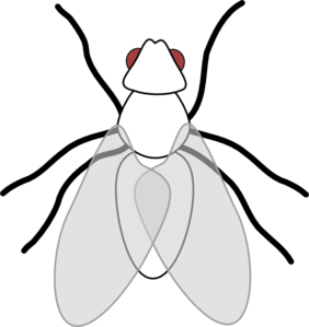 Fly Clipart Black And White.