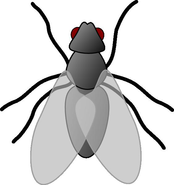 Fly Clip Art.