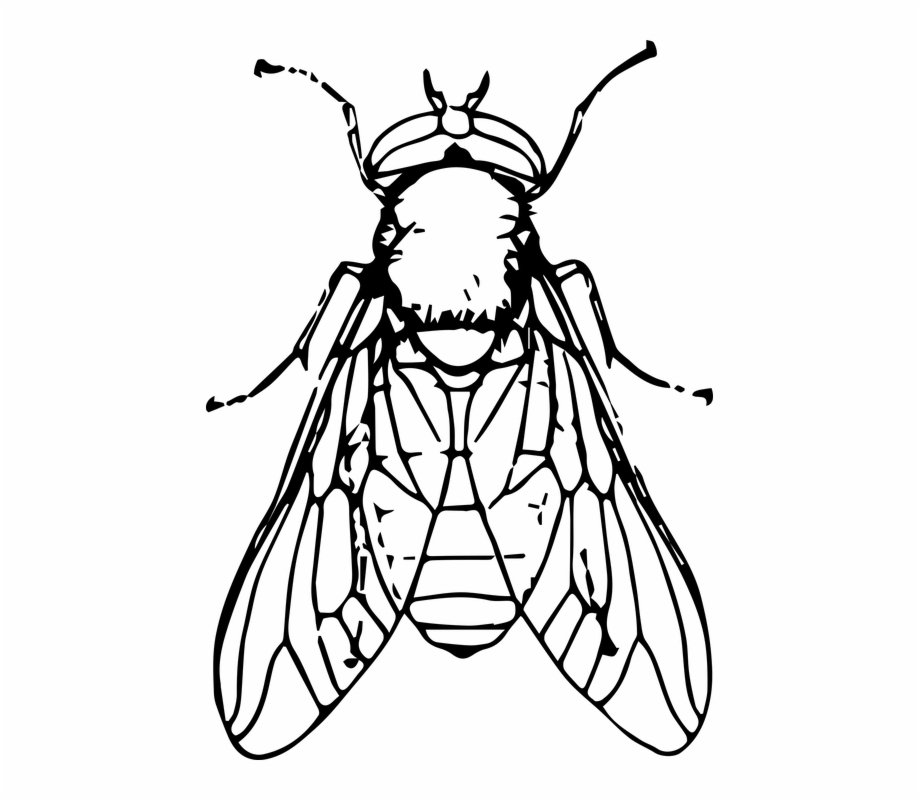 Fly Clipart Black And White Free PNG Images & Clipart Download.