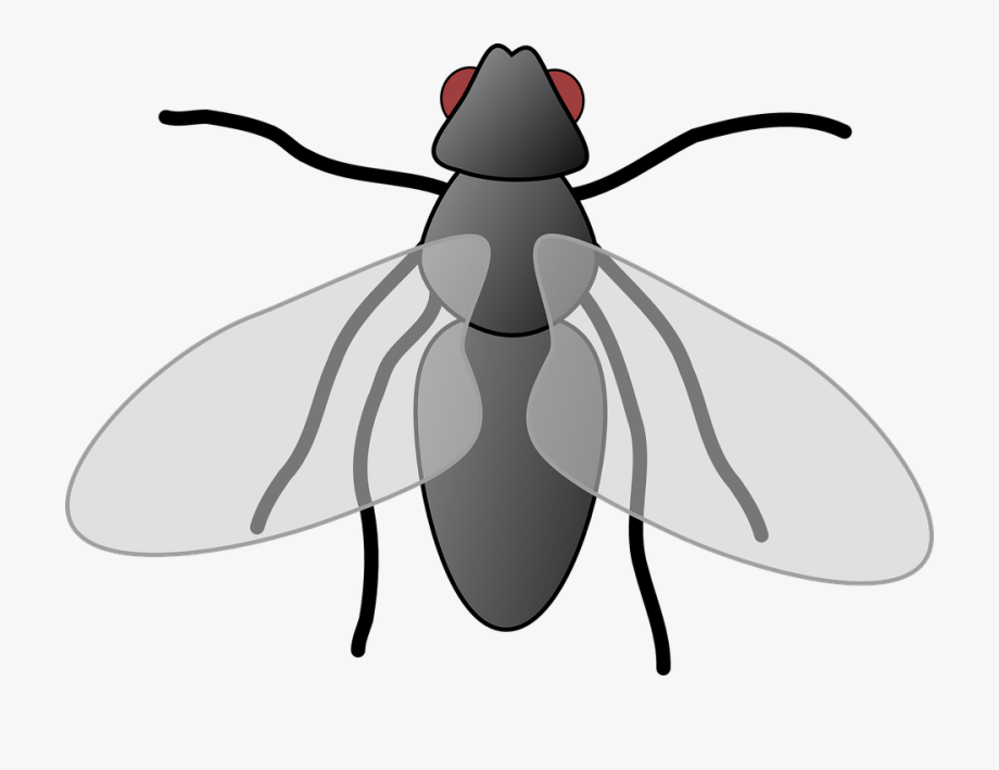 Fly Clipart Free.
