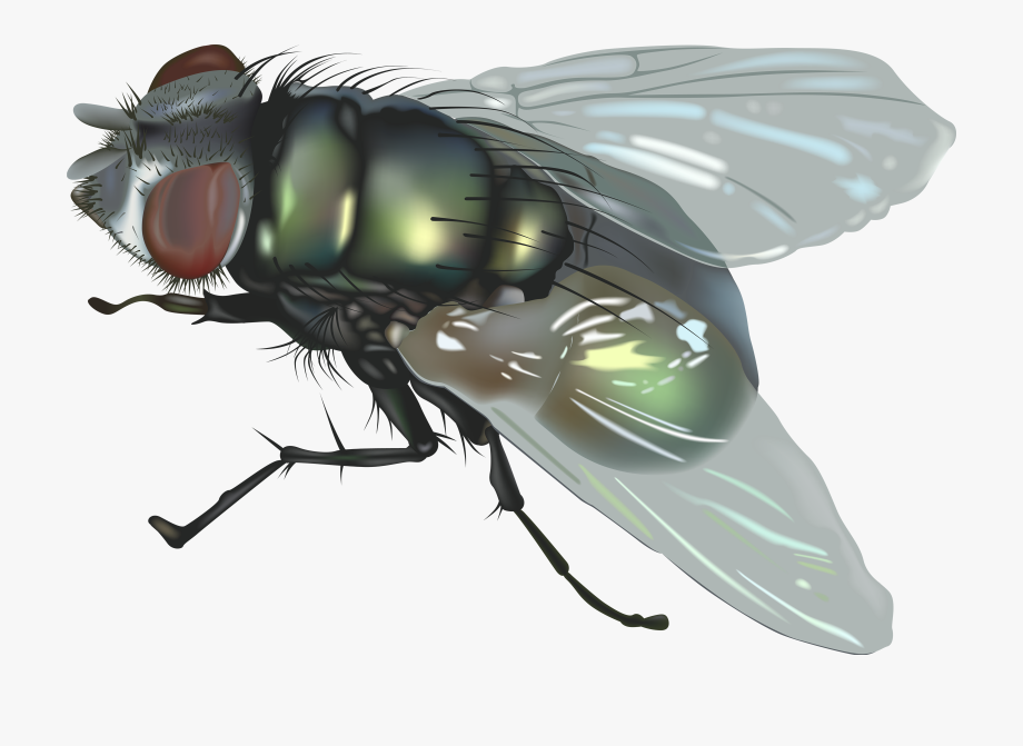 Flying Insect Clipart.