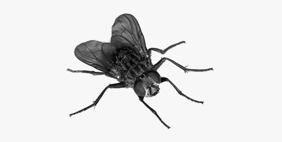 Fly Clipart Png.