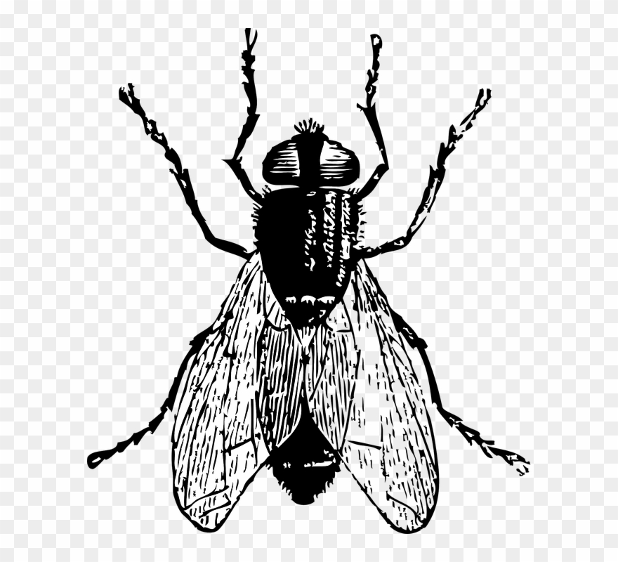 Black Horse Fly Png Clipart.