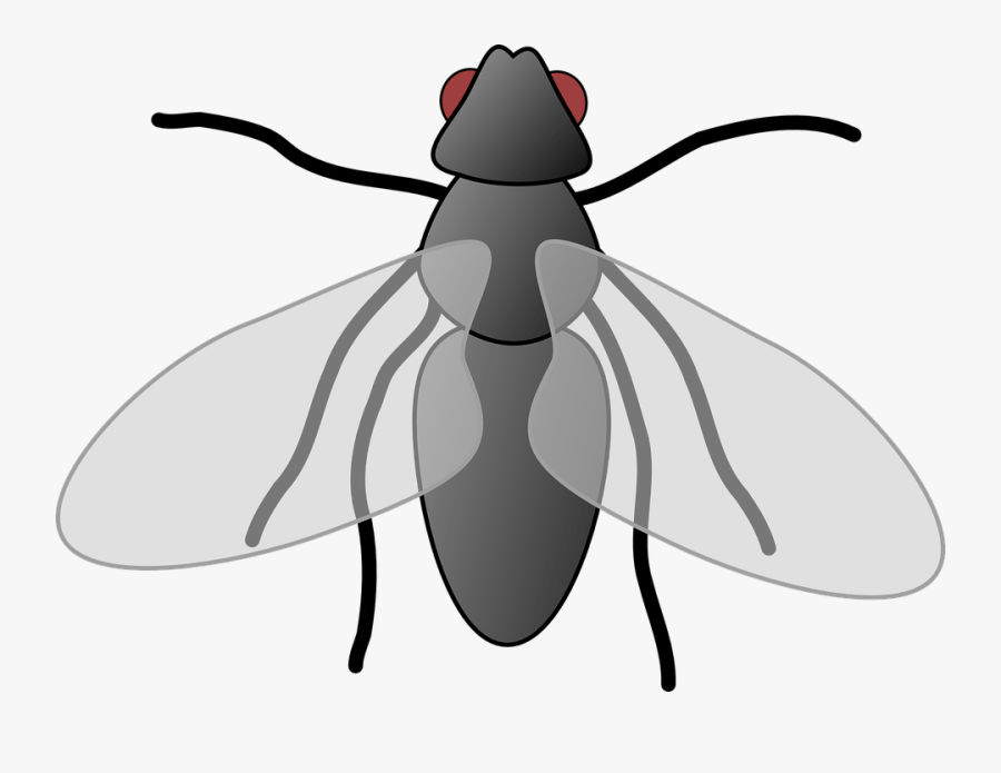 Transparent Fly Clipart.