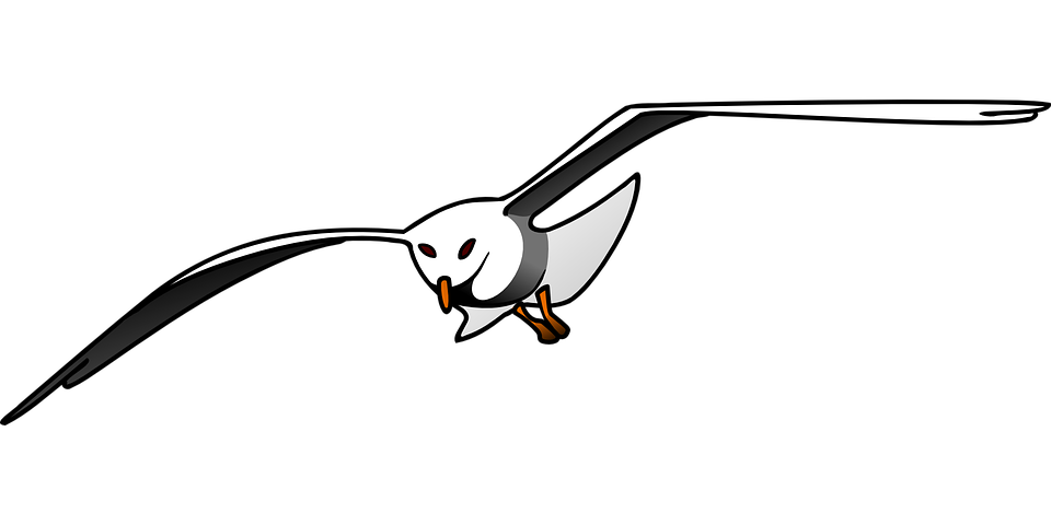 Free vector graphic: Bird, Seagull, Flying, Wings.