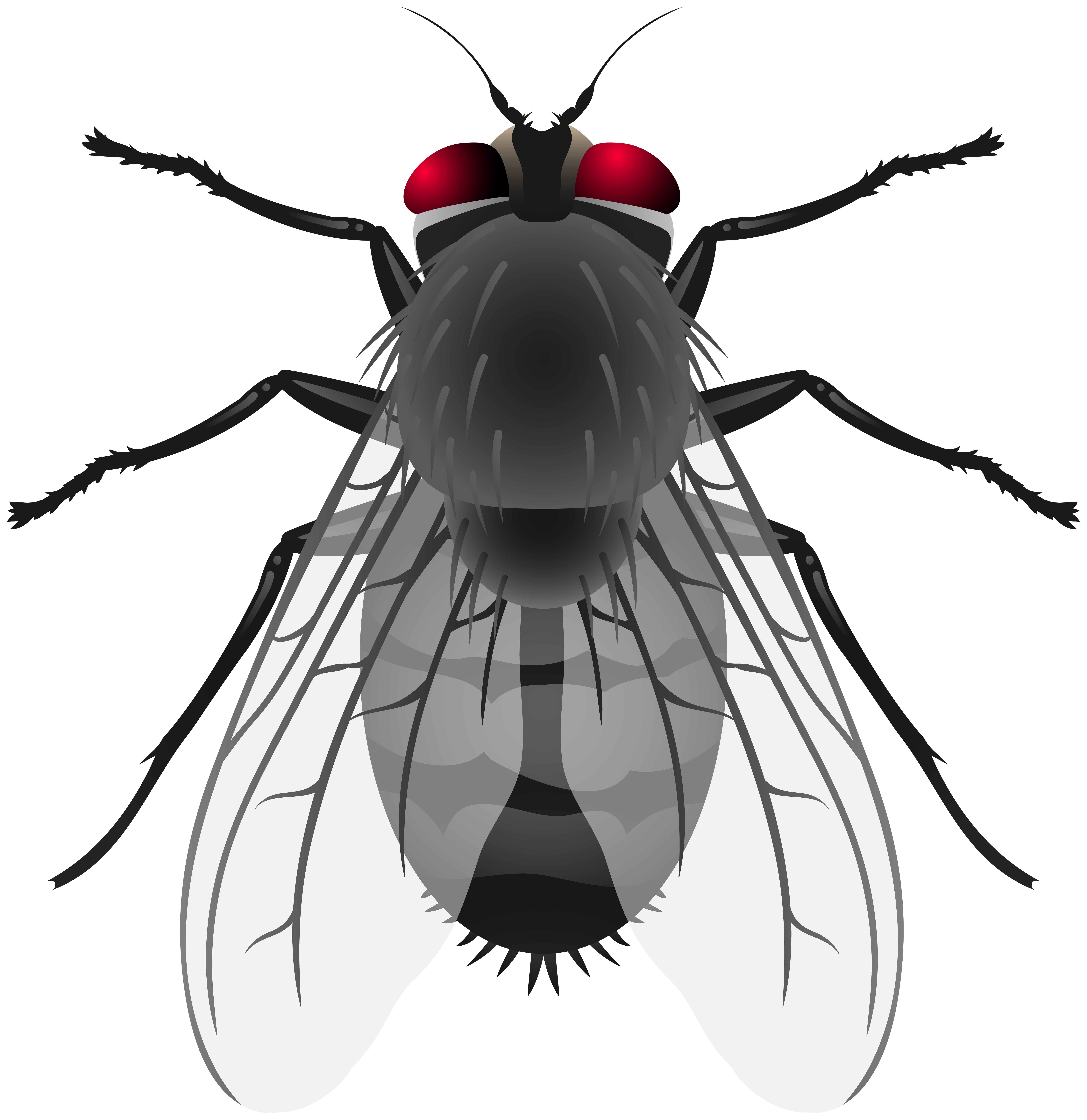 Fly PNG Clip Art.