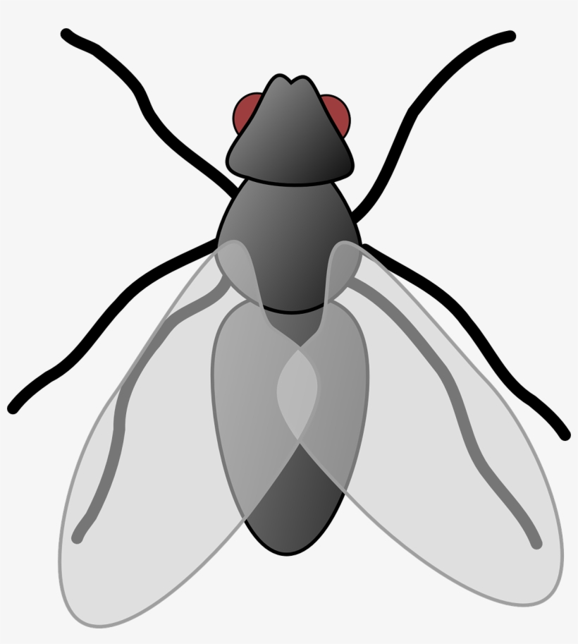 28 Collection Of House Fly Clipart.
