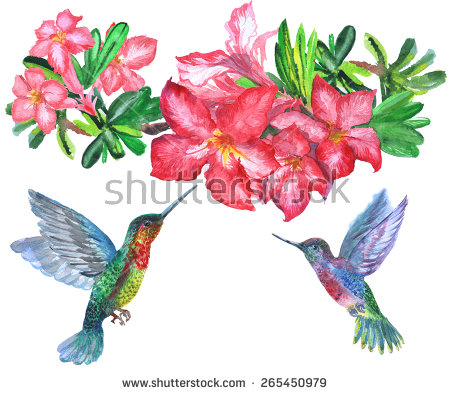 Set Four Small Bird Hummingbird Stock Vector 286355303.