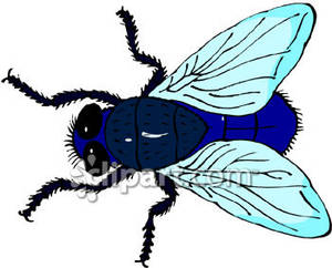 A_Blue_Fly_Royalty_Free_Clipart_Picture_081220.