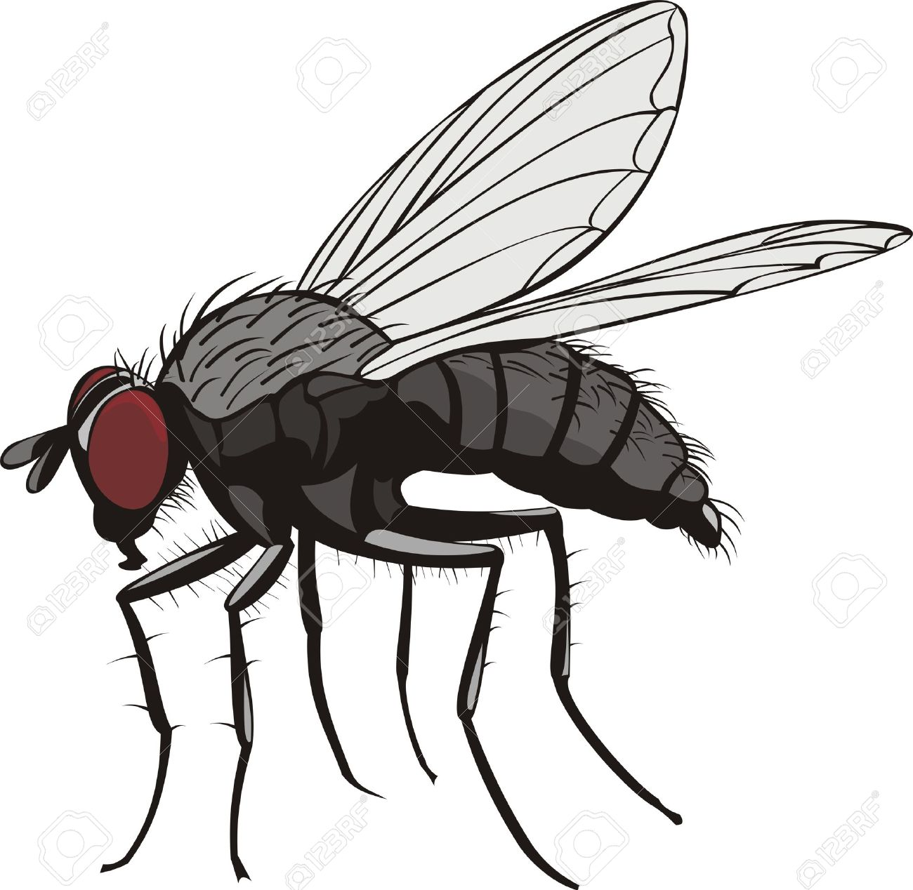 House fly flying clipart.