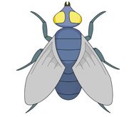 Insect fly clipart.