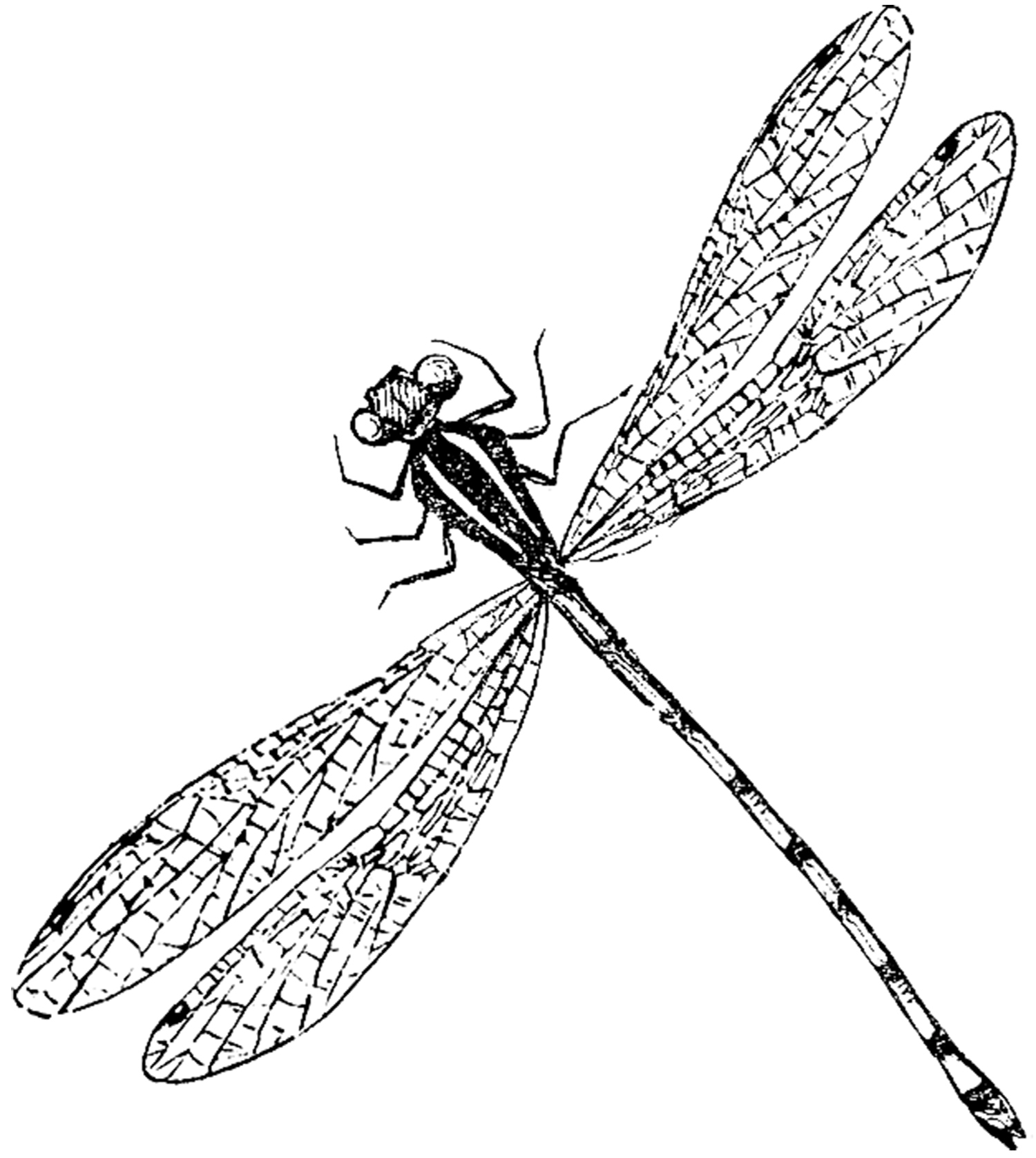 Dragonfly Graphics.