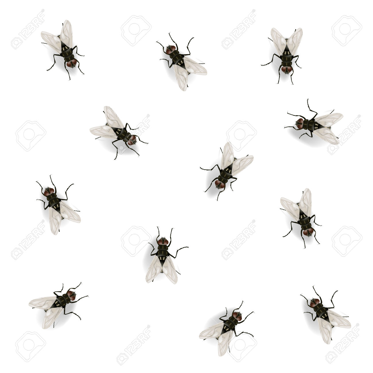 Many Flies On The Wall Vector Illustration Isolated On The White.