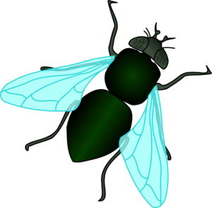 Free Fly Cliparts, Download Free Clip Art, Free Clip Art on.