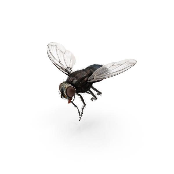 Fly PNG Images & PSDs for Download.