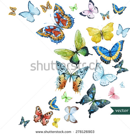 Butterfly Stock Images, Royalty.