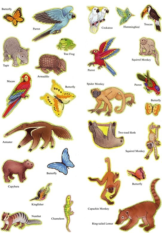 Flying animals clipart clipground