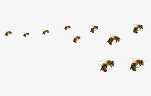 Free Flying Bee Clip Art with No Background.