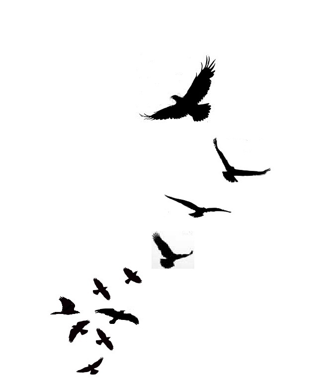 Flying bird clipart png.