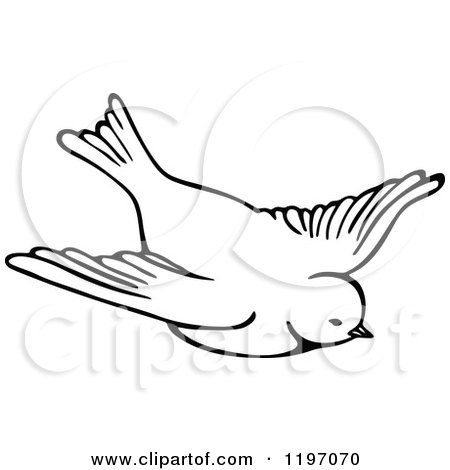 Clipart of a Black and White Flying Bird.