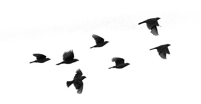 Birds Flying Silhouette at GetDrawings.com.