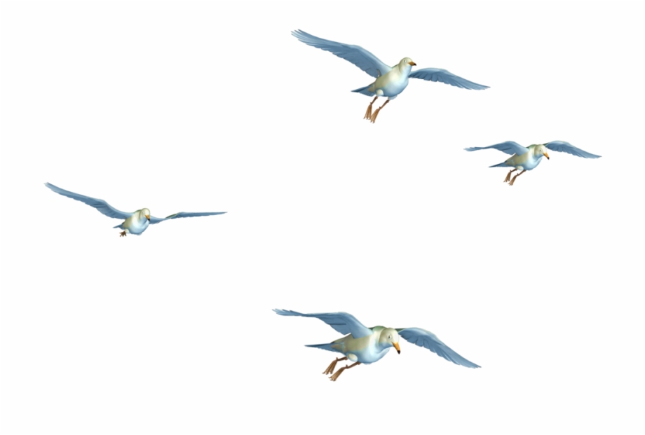 Flying Birds 07 Png Stock By Roys.