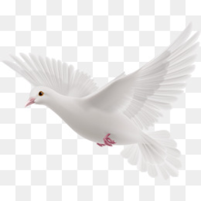 Download Free png Flying Bird PNG Images.