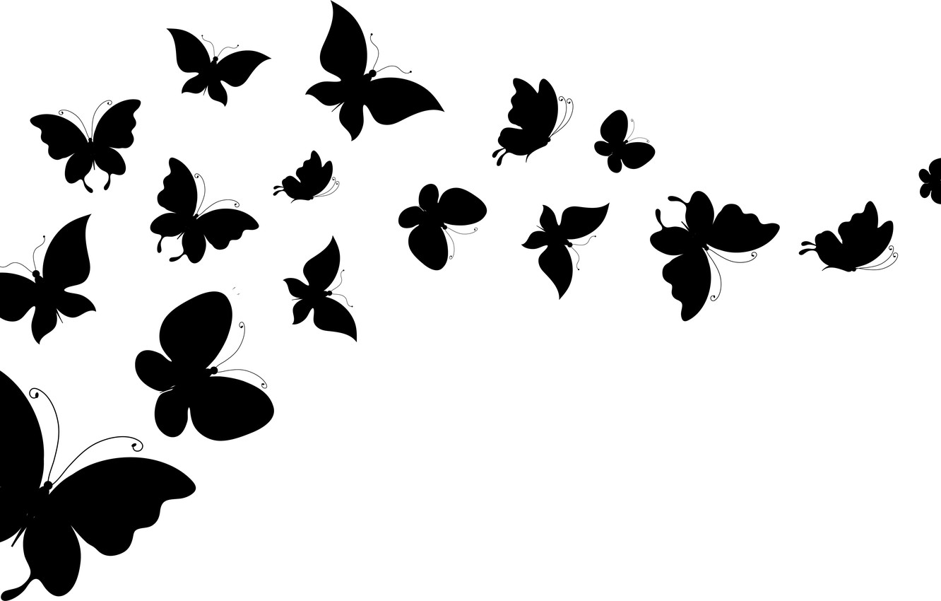 Photo Wallpaper White, Butterfly, Background, Wings.
