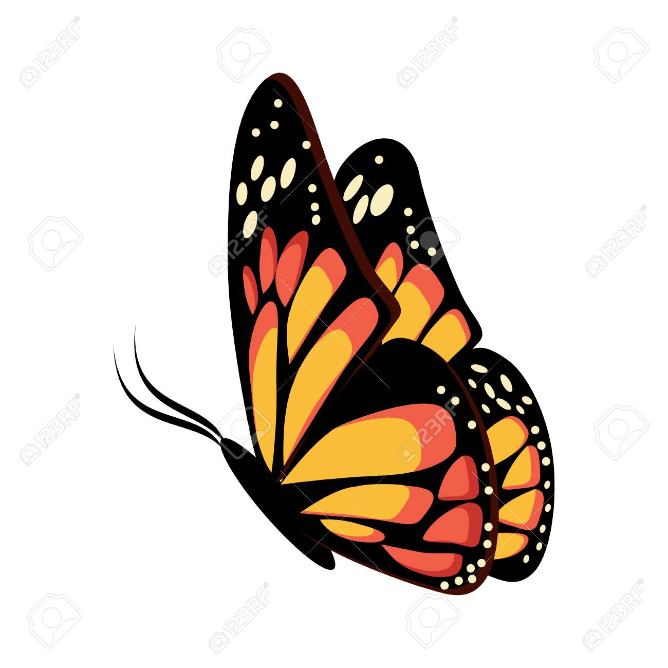 Beautiful yellow and orange sitting or flying butterfly Monarch..