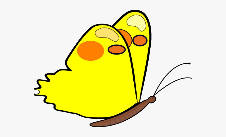 Flight Clipart Butterfly.